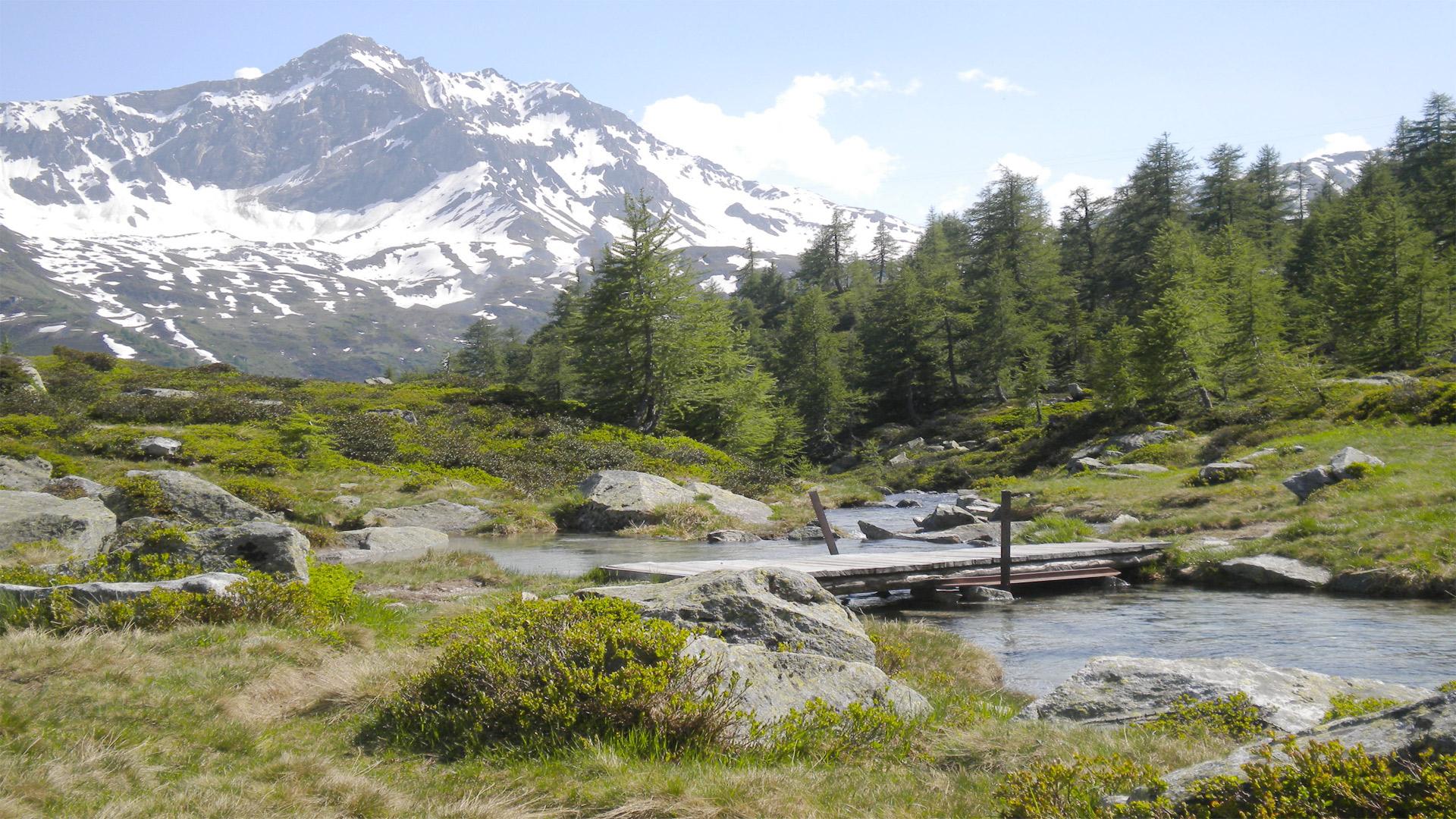 I mieli del Ticino Produzione miele artigianale alta valle Leventina